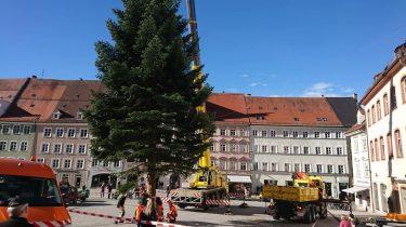 Baumpflege mit Kemeny Kranvermietung und Personenkorb